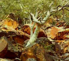 Kings Canyon - Northern Territory