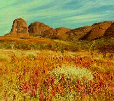 The Olgas - Northern Territory