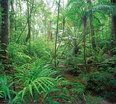 Daintree National Park, Queensland